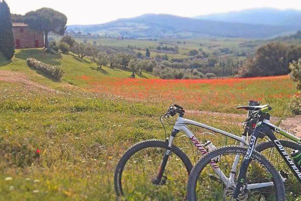 escursioni-mountain-bike-bolgheri_03